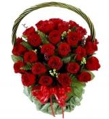 Hoa hổng đỏ thắm