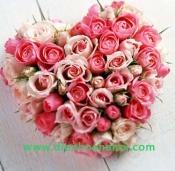 Hoa tình yêu HTY54